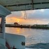 期間限定、入れ食いの船釣り!