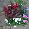 所用で八柱へ・・・花やハーブの苗