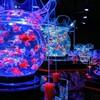 アートアクアリウム美術館に行ってみた。衰弱金魚は見当たらず、綺麗に泳いでました。(中央区日本橋本町)