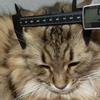 黒いデジタルノギスを買った! 猫の頭の大きさを測定してみた!