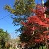 岡山市北区 今日の近水園(おみずえん)