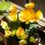 お花とかセンペルとか