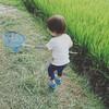 【2歳1ヶ月】お盆はムシムシパラダイス
