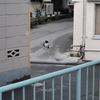 4月9日 東京の「猫町」の猫さま & 4月16日 能登鹿島駅の桜情景