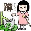 つくばい 茶道にて手を清める作法について