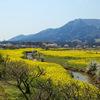 新潟県央桜散策(上堰潟公園〜弥彦公園〜大河津分水)