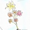 貰い物のお花
