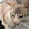2月22日 ニャンニャンニャン。猫の日に思う事。