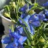 さわかやな青色の花✨