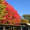 向山公園の紅葉