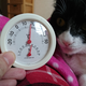 今日の黒猫モモ&白黒猫ナナの動画ー858