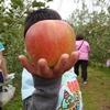 リンゴ狩り🍎