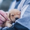 子犬の体力について