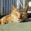 12月前半の #ねこ #cat #猫 どらやきちゃんB