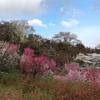 夜行高速バスで福島県に桜を観にいく1(2018/4/8)