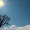 美瑛町 丘の下から眺めたセブンスターの木