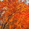 (2018.10.29)秋の日光紅葉巡り! ③