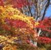 紅葉の「鼻顔(はなづら)稲荷神社、七五三で賑わう。