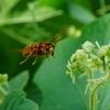 9月になるとスズメバチの被害のニュースが増えます。