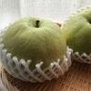 【まぼろしの梨】かおり梨を食べてみた