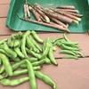 淡竹でメンマを作りました