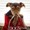 """A Dog's Way Home:コテコテの""""名犬ラッシー映画""""だとわかってても号泣させられる!"""