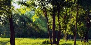 山田池公園(枚方市)は休日なのに混んでない穴場的な公園