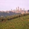 ダンテも「神曲」で明記したヴェルナッチャ (Vernaccia di San Gimignano)  イタリア 白ワイン 11