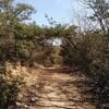 無名の山道