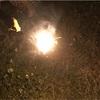 川崎市で手持ち花火は禁止されていない根拠まとめ