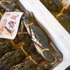 2020年9月28日 小浜漁港 お魚情報