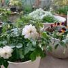 ミックスフラワー花壇の記録など