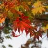 奥宇辰山県民公園の紅葉と十月桜(前編)