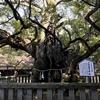 ツーリングで大三島の大山祗神社と猪骨ラーメンに行ってきた!