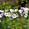 3月下旬の花