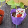 貸し農園でイチゴを高密植で栽培