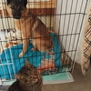保護犬ジョンコと時々登場猫のタマ