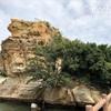 【兵庫県淡路市】淡路島屈指の景勝地「絵島」の4つの魅力に迫る!
