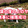 千葉県の「崖の上のヤギ」ついに捕獲!捕獲方法やその後は?安堵の声も多数