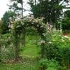 ミモザ・ガーデンの日記ーナチュラル・ガーデン