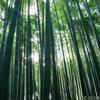 京都の嵐山で竹林を写す