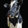 【テクノロジー】牛マスクは、世界を救う‼️地球のメタンガス削減に貢献🐂