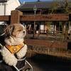 ワンちゃんとおでかけ!千葉県香取市・佐原の町並みへ行ってきました