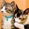 猫ちゃん😻健康診断のお知らせ