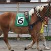 帯広【ばんえい競馬】レース観戦&バックヤードツアーに参加。豚丼の名店も近くにあり