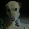 愛犬の散歩!飼い主が誤解しがちな3つの問題点と犬の社会化について♪