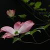 上向きの花