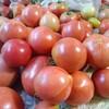 トマトの収穫量が減ってきた。