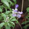 2011 リコリススプレンゲリーと庭の花