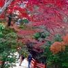 安芸の宮島 紅葉谷 を初めて訪れた時の感動 ~この美しさを後世に残したい~
